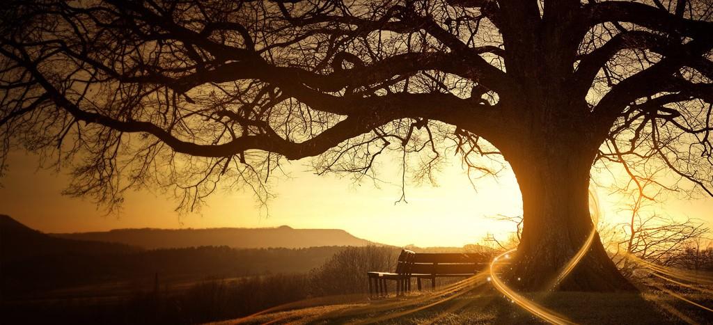 ZHAN ZHUANG Le Qi Gong de l'arbre