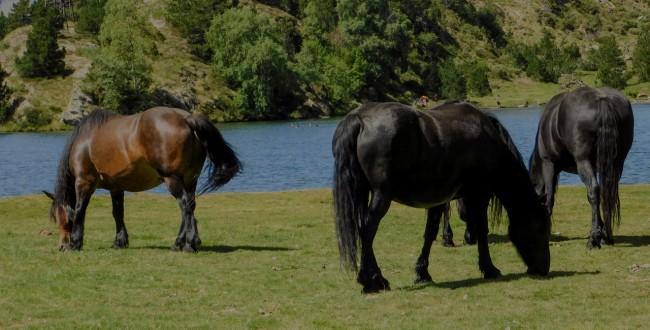 Une semaine à Angoustrine, dans les Pyrénées